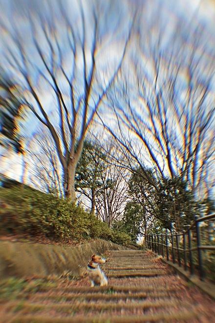 IMG_5459v.JPG